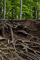 Tree Roots nets.jpg