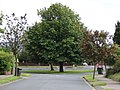 Tree at Bradley Road - Park Hill - geograph.org.uk - 503128.jpg