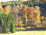 Trees - panoramio (47).jpg