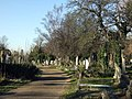 Trees at Hampstead cemetery - geograph.org.uk - 1121018.jpg