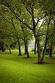 Trees of Horseshoe Bend.jpg