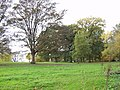 Trees on ancient parkland - geograph.org.uk - 598917.jpg