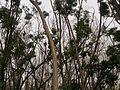 Trees talking to sky.jpg