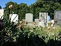 Trifolium fragiferum (subsp. fragiferum) sl2.jpg