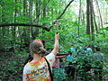 Turtle tracking at Haw River State Park 4.jpg