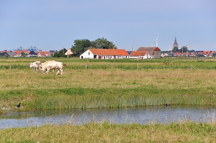Uitkerke (Blankenberge, Belgium): Uitkerkse Polders