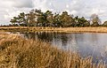 Uitzicht op poel. Locatie, natuurgebied Delleboersterheide – Catspoele 02.jpg