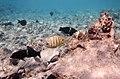 Unterwasserwelt im Roten Meer..DSCF0335ВЕ.jpg
