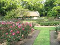 Vergelegen Rose Garden 6.JPG