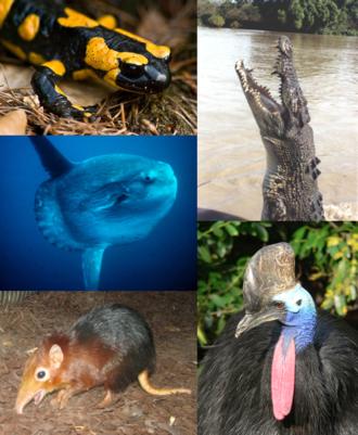 Vertebrate - Individual organisms from each major vertebrate group. Clockwise, starting from top left: