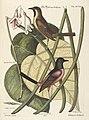 Verzameling van uitlandsche en zeldzaame vogelen (Tab. XCVIII) (7894270616).jpg