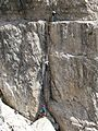 Via Ferrata ladder Brenta.jpg