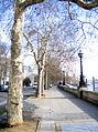 Victoria Embankment.jpg