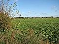 View NW across field beside Leavy Oak Lane - geograph.org.uk - 1565481.jpg