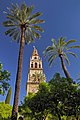 View of Bell tower of the Mosque-Cathedral from Court of Oranges. Cordoba, Spain.jpg