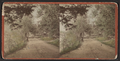 View of a road, from Robert N. Dennis collection of stereoscopic views.png