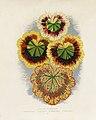 Vintage illustrations by Benjamin Fawcett for Shirley Hibberd digitally enhanced by rawpixel 80.jpg