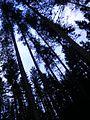 Vooremäe mets.JPG
