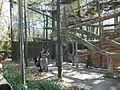 WA Lemurs.JPG