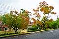 Waimea Road, Lindfield, New South Wales (2011-04-28) 03.jpg