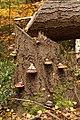 Waldspaziergang 2011-11-01-4128.jpg