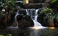 Waterfall at the Polynesian.jpg