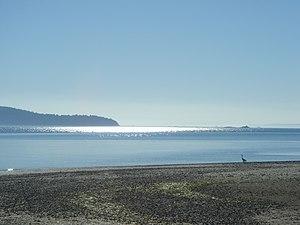 Coastal cutthroat trout - Typical sea-run cutthroat habitat, Puget Sound beach