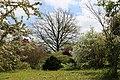 Wiese unter Baeumen Botanischer-Garten Muenchen-5.jpg