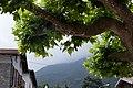 Wikimania Esino Lario 2016-06-25 T03 planetree.jpg