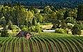 Willamette Valley Wine Country (25134584933).jpg