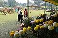 Winter Flower Show - Agri-Horticultural Society of India - Alipore - Kolkata 2013-01-05 2364.JPG