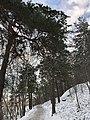 Winter in Årstaskogen.jpg