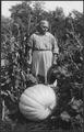 Woman with large pumpkin at Cass Lake - NARA - 285291.tif