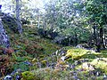 Woodland, Glen Strathfarrar. - geograph.org.uk - 1520989.jpg
