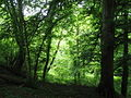 Woodland between the cycle track and Afon Cegin - geograph.org.uk - 813265.jpg