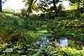 Woodland pool - Aberglasney - geograph.org.uk - 1484346.jpg