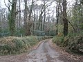 Woodland road, through Haydon Common - geograph.org.uk - 1057989.jpg