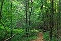 Woods Path (9605467398).jpg