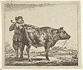 Young Herdsman with a Bull, from Different Animals MET DP828089.jpg