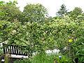 Yvoire-Jardin des Cinq Sens (8).jpg