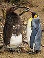 Zürich Zoo DSC 5814 3 (13389572234).jpg