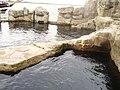 Zoo am Meer 2008 PD 19.JPG