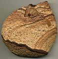 """Liesegang banding"" developed in a volcanic tuff (8.6 cm across).jpg"