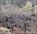 (((پاییز دره آشان ))) - panoramio (1).jpg