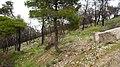 Πληγείσα έκταση δάσους Βριλησσίων - panoramio.jpg