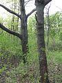 Дендрологічний парк 238.jpg
