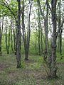 Дендрологічний парк 243.jpg