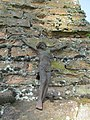 Новая Мыш. На старых каталіцкіх могілках (01).jpg