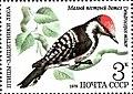 Почтовая марка СССР № 5002. 1979. Птицы - защитники леса.jpg