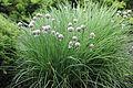 Растения в Седово 294.jpg